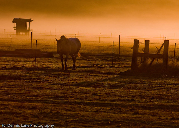 Tired Horse - Western Washington - file name for ordering listed below