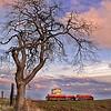 Oak tree - farm land - Eastern Oregon -  file name for ordering listed below