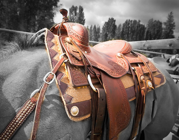Montana, Horse & Saddle - St. Regis, MT - file name for ordering listed below