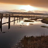 Western Washington Slough -  file name for ordering listed below