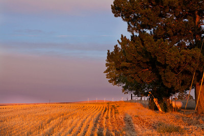 Sun Rise on wheat field - Condon, Oregon. Note File Name below for ordering