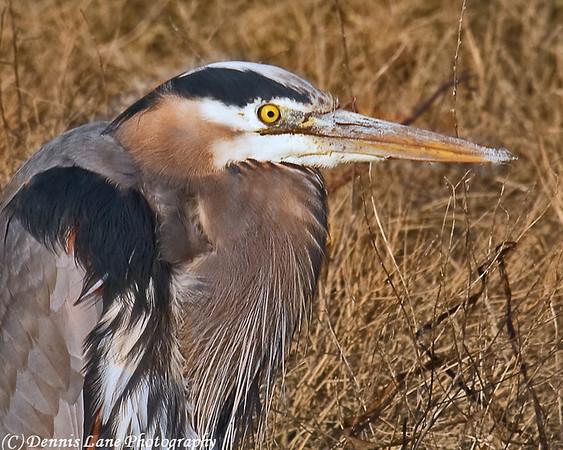 Blue Heron Anacortes, WA