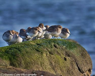 Sea Birds  Anacortes, WA