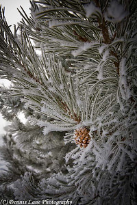 Frosty Pine Cone - Cascade, ID. Note File Name below for ordering