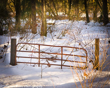 Snow Gate near Rockport, WA -Note File Name below for ordering