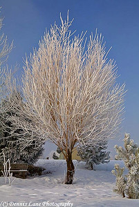 Frosty Winter Tree - Cascade, ID - Note File Name below for ordering