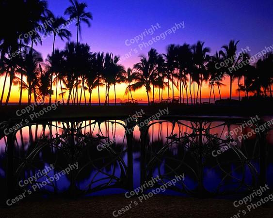 Hawaiian Nights (H)
