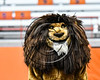 General Brown Lions mascot at the Section III Class C Football Championship game at the Carrier Dome in Syracuse, New York on Saturday, November 4, 2017.