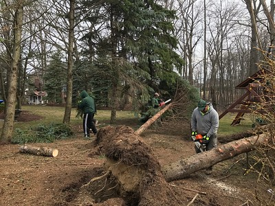 Four trees fell, but the power remained on near this Oakland Township home. A crew from Greener Grounds Outdoor Solutions works to remove fallen evergreen trees in Oakland County. Photo by Stephen Frye / Digital First Media.