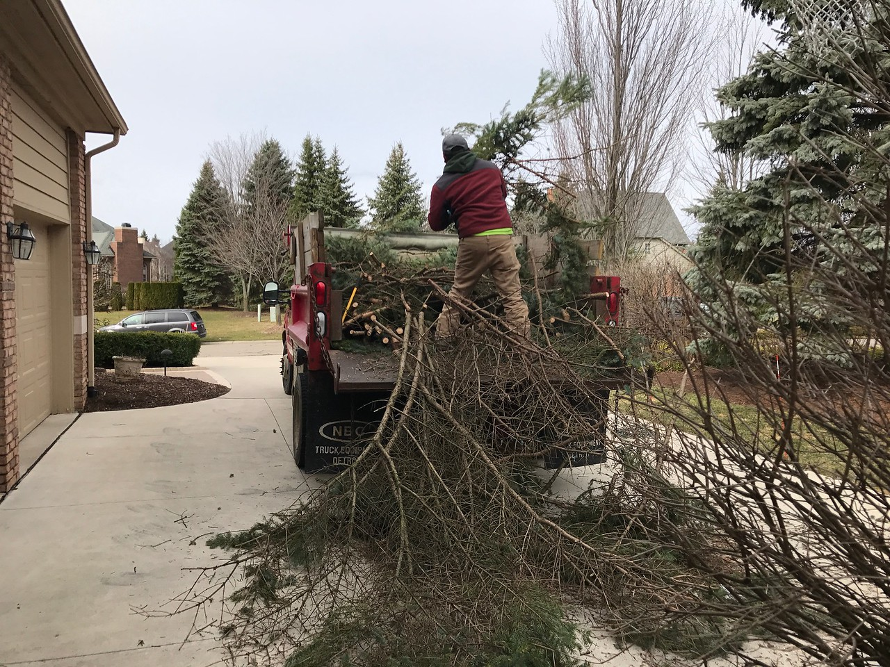 A crew from Greener Grounds Outdoor Solutions works to remove fallen evergreen trees in Oakland County. Photo by Stephen Frye / Digital First Media.