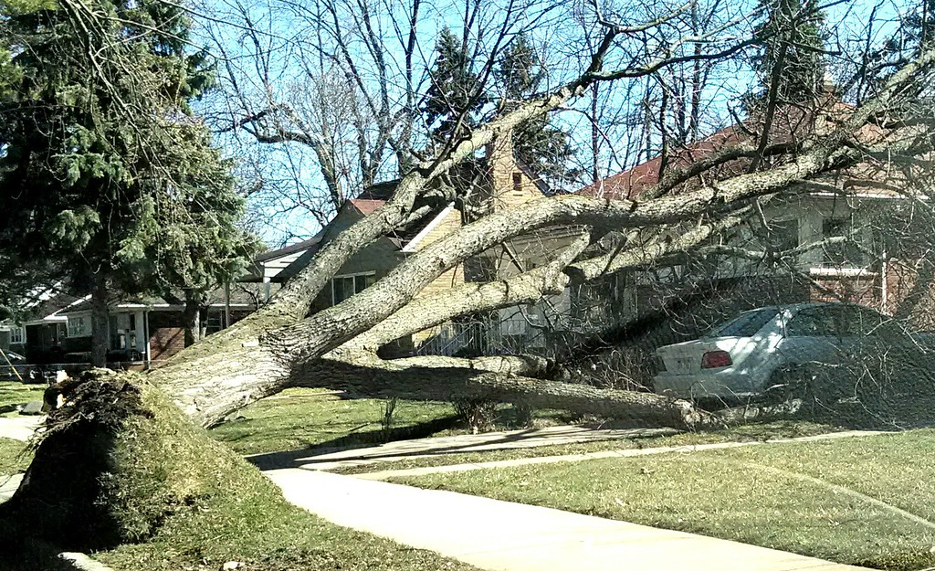 . Tree uprooted and falls on driveway on house  on Menominee, east of Telegraph Road in Pontiac. (The Oakland Press/MARVIN GOODWIN).