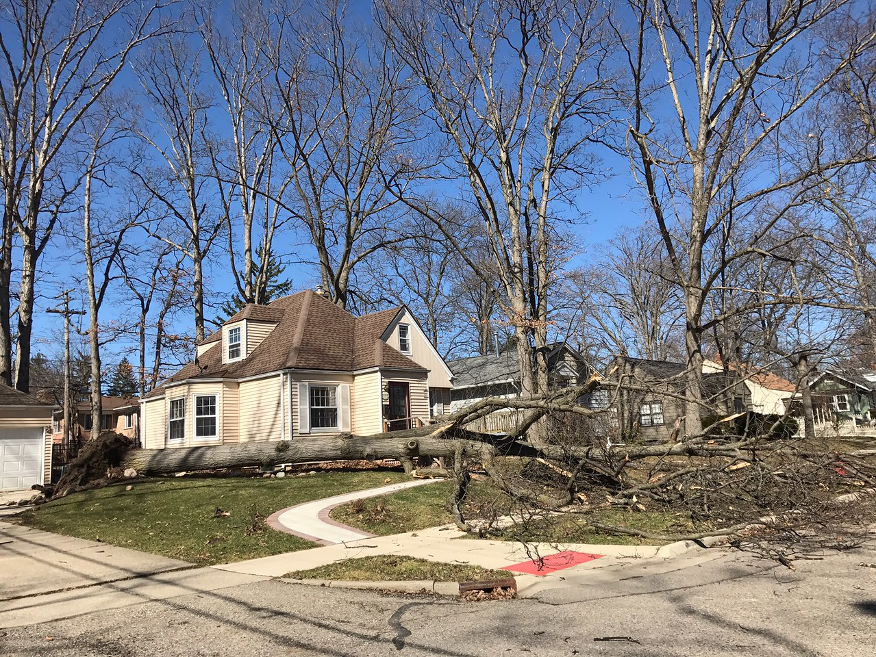 A large tree was uprooted in a Ann Arbor yard on Wednesday, March 8, 2017. (Photo provided)