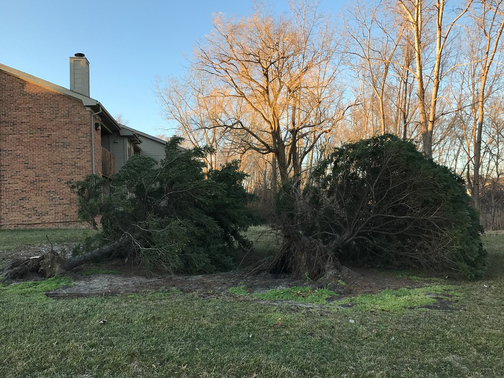 . Photo of trees knocked down in Shelby Township. Photo by Shannon Coughlin / Digital First Media.