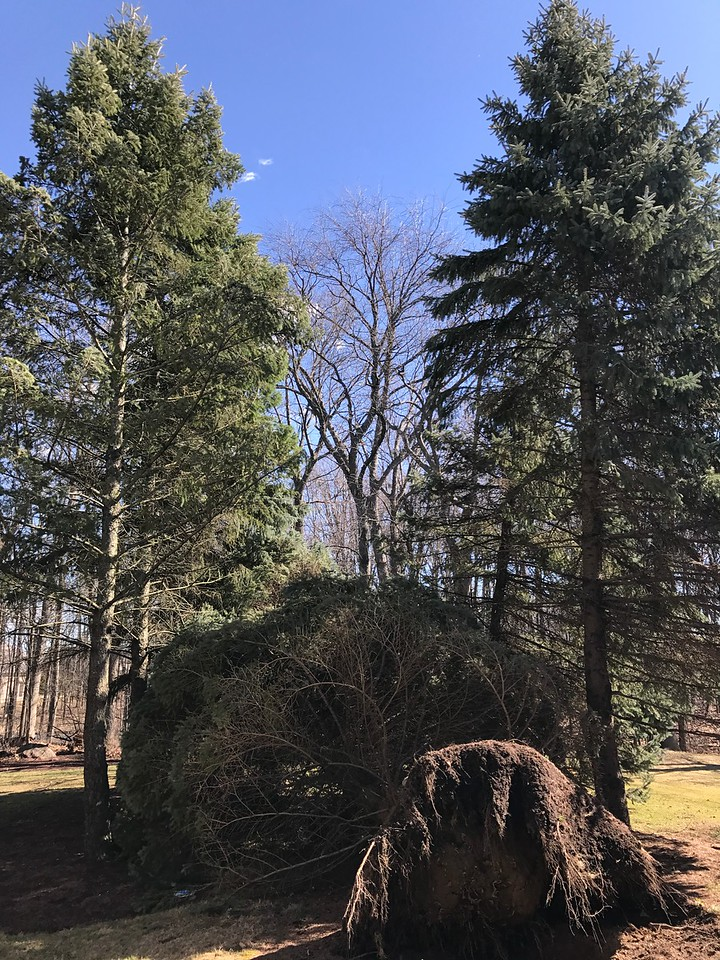 An hour later, the tree on the right was knocked over in Oakland Township. Stephen Frye / Digital First Media