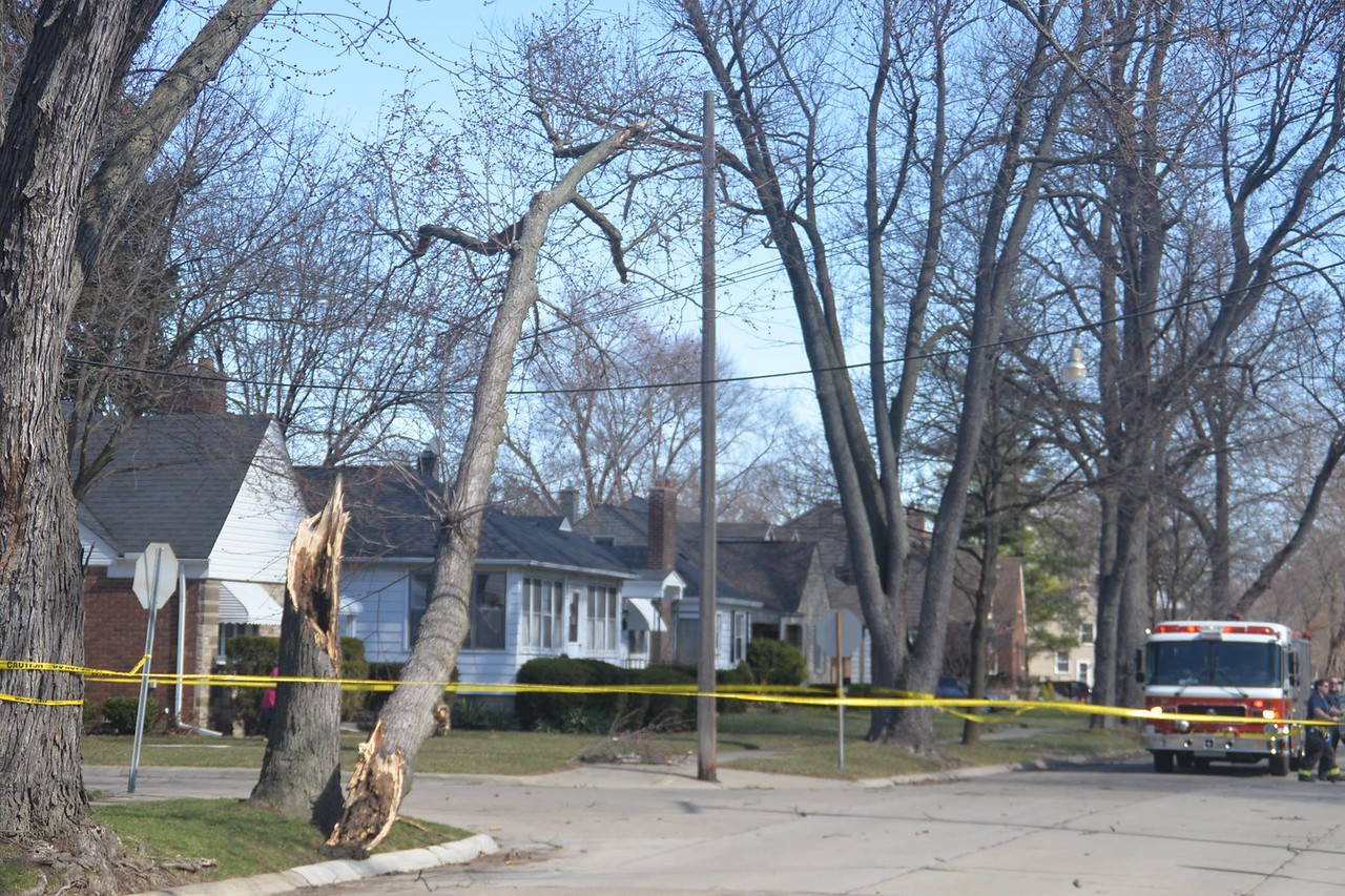 Trees crashed down on power lines on Beech Street in Dearborn. Photo by Ian Kushnir / For Digital First Media.