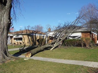 An uprooted tree rests on a house on Harding near Colgate in Dearborn Heights as a result of Wednesday's high winds that whipped through the area. Photo submitted by Jim Jacek.