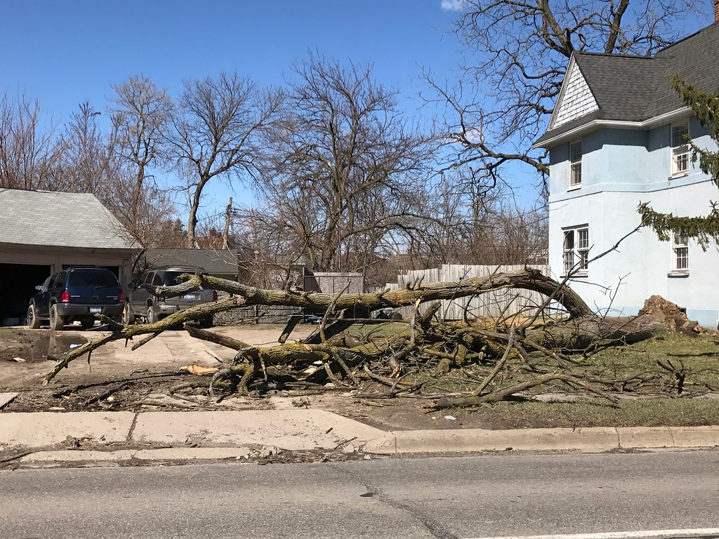 . A tree outside of a home on Pontiac\'s Perry Street. Stephen Frye / Digital First Media