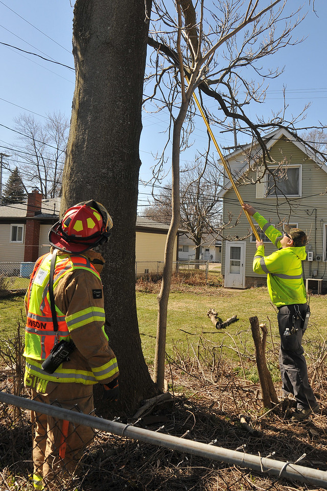Clawson Firefighters Captain Neil Johnston (left) and Steve Wendell, work to remove a heavy tree branch that fell across an electrical wire at Washington and 14 Mile. On Wednesday, the U.S. National Weather Service issued a high wind warning for most of Southeastern Michigan. Wind gusts up to 65 MPH brought down trees and power lines leaving over 230,000 with power in the metro Detroit area. The warning remains in effect until 7:00 p.m. this evening. Liz Carnegie, For The Daily Tribune