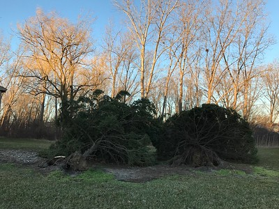 Photo of trees knocked down in Shelby Township. Photo by Shannon Coughlin / Digital First Media.