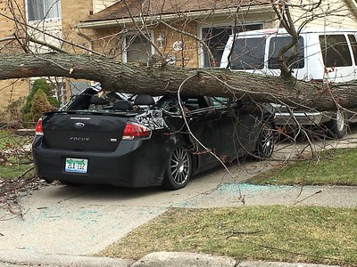 A large branch broke off a tree and landed on a Ford Focus on Sunnybrook Street in Royal Oak Wednesday. (Jason Schmitt, The Oakland Press)