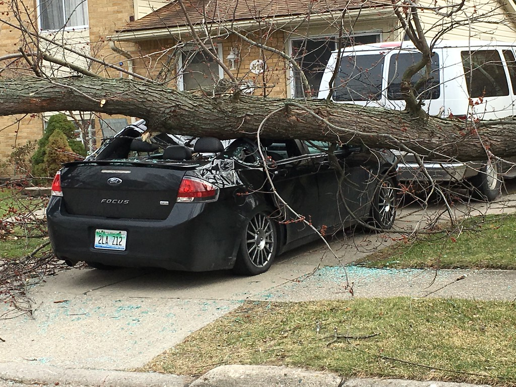. A large branch broke off a tree and landed on a Ford Focus on Sunnybrook Street in Royal Oak Wednesday. (Jason Schmitt, The Oakland Press)