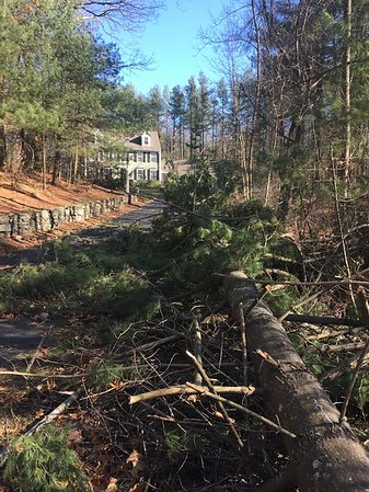 High winds bringing down trees