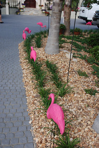 The flamingoes will lead the way....
