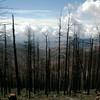 Fire damage from last year's Aspen Fire