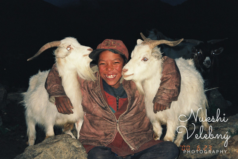 Boy with blue eyed goats