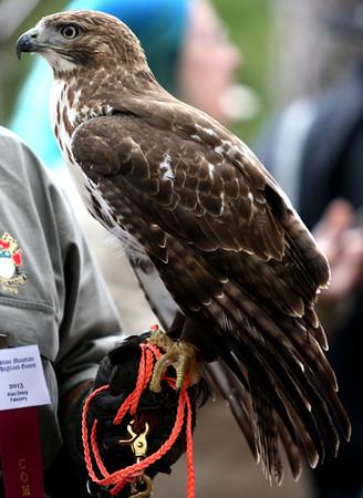 2013 Falconry Exhibition
