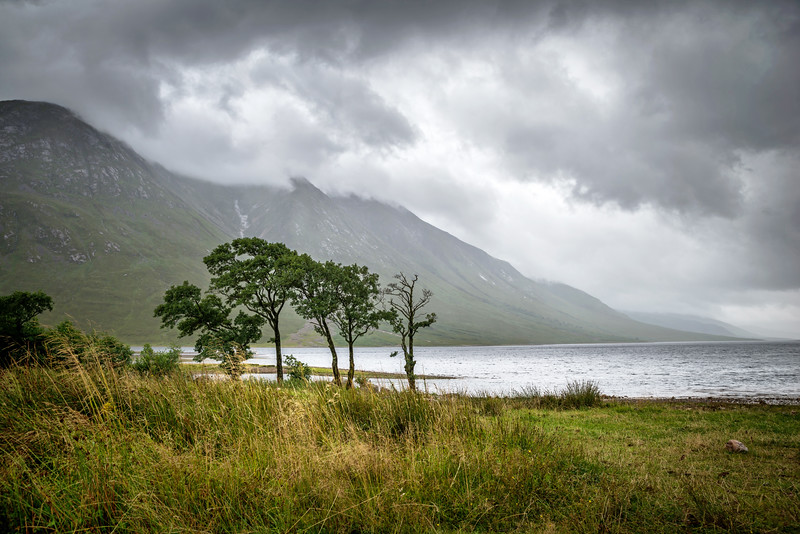 Lonely Trees at Loch Etive