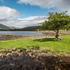 A Solitary Tree in Applecross [1]