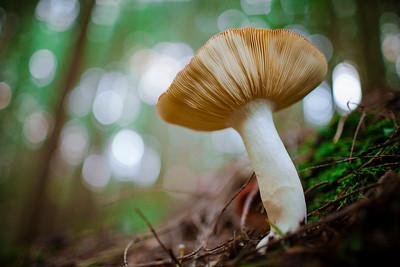 Gill Mushroom