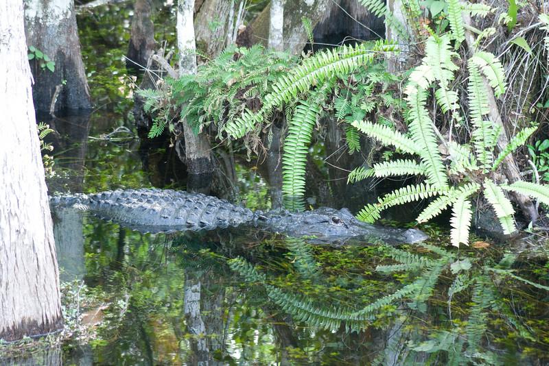 alligator loop road pond