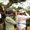 Birding from the canopy platform, by guide Mitch Lysinger