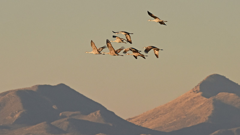 Wintering Sandhill Cranes against a fine backdrop, by participant Scott Stoner.