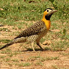 The flashy Campo Flicker by participant Susan Disher