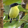 Tody-flycatchers are lovely little birds to see. This one's a Common Tody-Fly by participant Bill Byers.