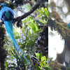 Resplendent Quetzals by participant Jan Wood and guide Cory Gregory