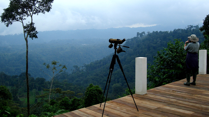 Birding from the deck at Wild Sumaco Lodge is a delight. Photo by Rose Ann Rowlett.