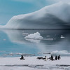 Adelie Penguins and blue ice, photographed by guide Tom Johnson.