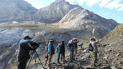 Birding Port de Boucharo in the Pyrenees, by participant Linda Nuttall