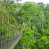 Tha canopy walkway at Kakum, by participant Greg Griffith.