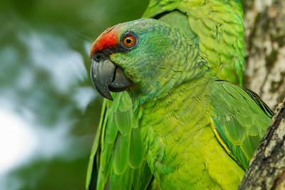 Festive Parrot, by participant Benedict de Laender