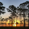 The piney woods at dawn, by guide Doug Gochfeld.