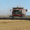 Riding a rice combine as it harvests by guide Eric Hynes