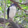 Frances's Sparrowhawk, photographed by participant Sheila Vince