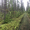Boreal forest scene, by guide Cory Gregory