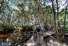 Mangrove boardwalk by guide Chris Benesh
