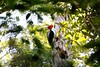Pale-billed Woodpecker by participant Jeanette Shores